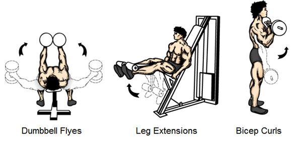 Isolation Exercises - Dumbbell Flyes Leg Extensions Bicep Curls
