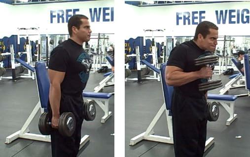 Cross-body hammer curl instructions and video | Weight Training Guide