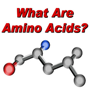 Amino Acids for fitness