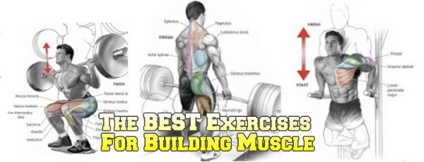 The Best Exercises For Building Muscle