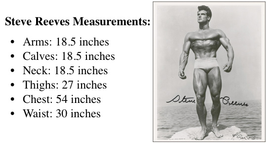 steve-reeves-measurements