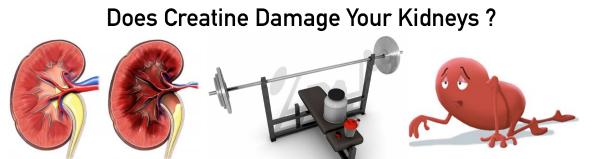 creatine damage kidneys