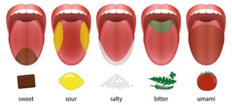 5 Basic Tastes